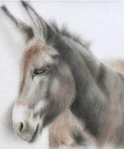 donkey study by gretchen woodman